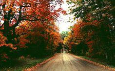 Pinterest: @MagicAndCats ☾ Autumn road.