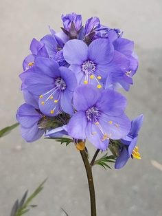 Flowers Gif, Pretty Flowers, Unusual Flowers, Amazing Flowers, Purple Flowers Wallpaper, Hawaiian Gardens, Unique Plants, Floral Photography, Flower Photos