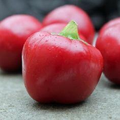 Chili Cherry Bomb (Schärfe 3) (Samen)  Capsicum annuum Kugelrunde, dickwandige Sorte. Die Früchte sind etwa 5cm groß. Eine absolute Delikatesse sind gefüllte Cherrybombs mit Frischkäse, Mozzarella & Thunfisch oder Gorgonzola & Hackfleisch. Einfach oben den Kelch wegschneiden, die Samen herausnehmen (geht ganz leicht), mit den Zutaten füllen und bei 180°C etwa 15-20min in den Ofen schieben und überbacken. Capsicum Annuum, Stuffed Hot Peppers, Fruits And Vegetables, Mozzarella, Spicy, Seeds, Chilis, Plants, Food