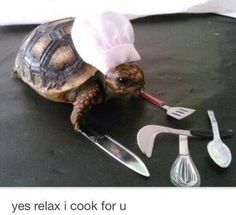 Tiny Turtle Chef. In case you're having a bad day.