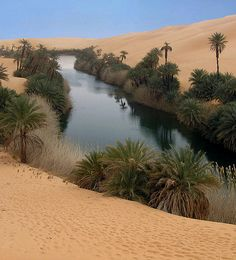 an oasis very cool