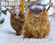 We have a sense of purpose.