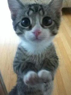 look at his cute little face! via @EmrgencyKittens