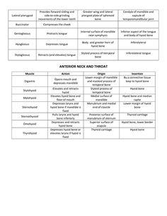 Muscle List Action Origin Insertion Mrs Smutz page:2