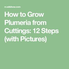 How to Grow Plumeria from Cuttings: 12 Steps (with Pictures)