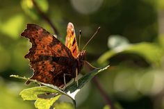 The Comma comes to a full-stop | Andrew Wakefield | Flickr