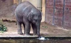 Nur ein Baby Elefant der Blubberblasen macht ( 1 Video )   Atomlabor Wuppertal Blog