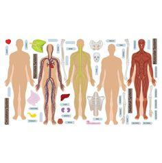 totsy.com: Human Body Wall Set