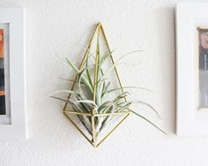Himmeli fig. 3 - Wall Sconce | Brass Air Plant Holder | Modern Minimalist Geometric Ornament on Etsy, $18.00
