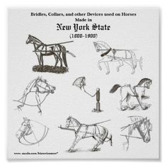 Bridles and collars made in N.Y.S. Print