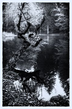 Klagenfurt, Shades Of Grey, River, Black And White, Outdoor, Water Pond, Outdoors, Black N White, Shades Of Gray Color