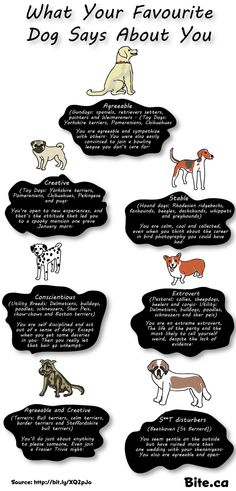 What your dog says about you