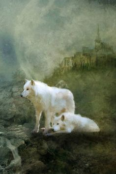 Beautiful white wolves
