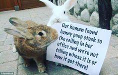 What? That is amazing! #rabbit #bunny #bunnyrabbit #bunnies #bunnyshaming #petshaming #cuteanimals #pets