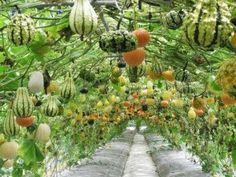 Miss Gardening..... -