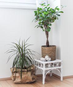 Living Room Decor, Decorating Ideas, Plants, Home Decor, Drawing Room Decoration, Decoration Home, Den Decor, Room Decor, Plant