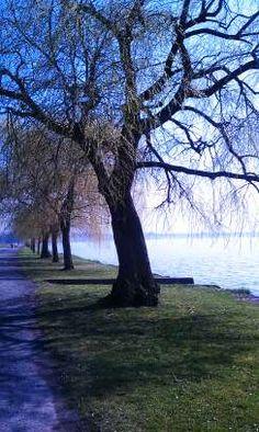 The Willows, in early spring, on the North Shore of Seneca Lake, Geneva, NY