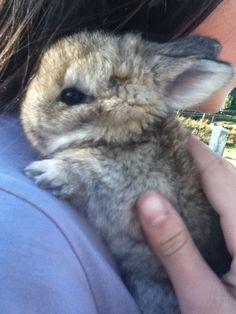 baby angora rabbits - Google Search