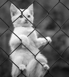 cat, animal, and black and white εικόνα