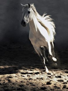 Wildlife photography animals white horse