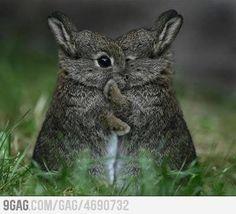 Rabbit babies hugging. ♥