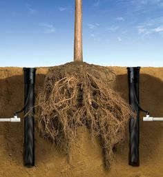 Rain Bird's Root Watering System (RWS) enables vital water, oxygen, and nutrients to bypass compacted soil and directly reach tree and shrub root systems. The RWS promotes tree and shrub investment protection, watering efficiency and landscape aesthetics through deep root growth and tree development.