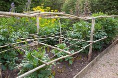 How to plant and grow dahlia bulbs Sarah Raven # design Small Backyard Gardens, Farm Gardens, Backyard Landscaping, Outdoor Gardens, Veg Garden, Garden Plants, Fruit Garden, Vegetable Gardening, Organic Gardening