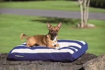 Stripy dog bed for your favourite pooch.  #dogs