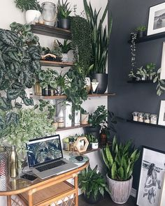 indoor benefits Find inspiration for adding some beautiful green to yo. Find inspiration for adding some beautiful green to your space, and reap the benefits of living with houseplants at the same time. Indoor Plant Wall, Plant Wall Decor, House Plants Decor, Indoor Plants, Bedroom With Plants, Indoor Living Wall, Living Room Decor With Plants, Indoor Succulent Garden, Plant Rooms