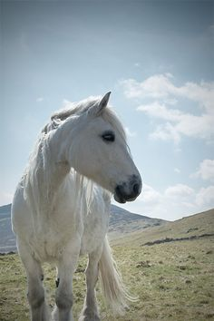Horse photography equine art nature photo door MitchMcfarlanePhotos