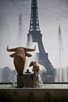 The bull looking at the Eiffel Tower #Paris
