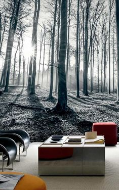 1 Wall / XXL Wall Mural / BLACK & WHITE FOREST | 輸入壁紙専門店 WALPA