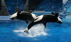 ☀ / #killerwhale #animal