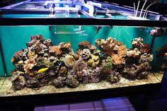 How to Start a Saltwater Aquarium -- via wikiHow.com
