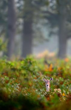God began sending deers - 3 real deers and one vision, as a witness to His Power and Promise that I would overcome the difficulties I was facing - Praise the Lord