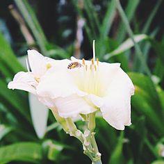 #honeybee #honeybees #flowers #flower #flowerstagram #instaflowers