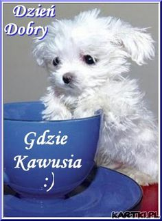 Dzień Dobry :) A gdzie kawusia ? Cute Puppies, Dogs And Puppies, Animals And Pets, Cute Animals, Good Morning Inspiration, Weekend Humor, Good Morning Good Night, Cute Gif, Man Humor