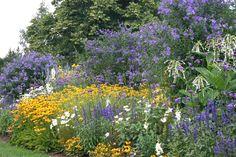 blue-white-yellow garden