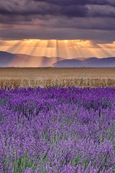 Sunbeams over Lavender - photography by Michael Blanchette