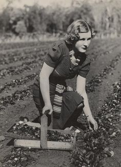 No black plastic here! Picking strawberries in the Redlands by State Library of Queensland, Australia, via Flickr