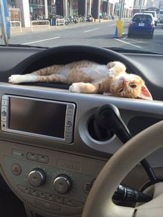 Cute Orange tabby kitten chillin in the car