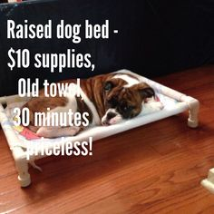 Do it yourself raised dog bed with pvc piping and an old towel.