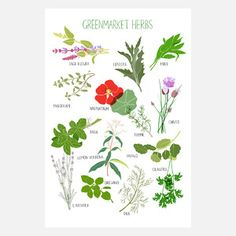 Greenmarket Herb Print 9x12, $20