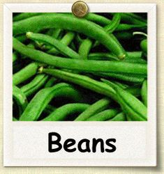 Guide to Growing Beans