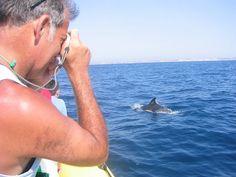 Golfinhos Lagos, Algarve - Go Discover Portugal travel