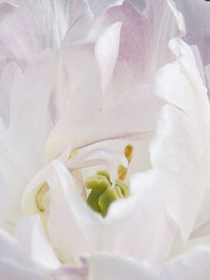 Check out 'White Flower' by Aaron Gustwiller on TurningArt