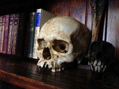 Human skull replica The Elder by NightshadeFX on Etsy