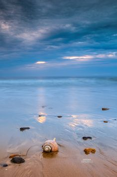 Sunrise and Shell On Nauset Beach, Orleans, , Cape Cod. Dapixara photography.