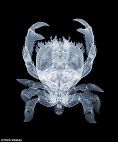 Claws: An X-ray of a crab, by Nick Veasey