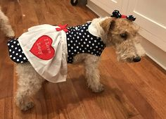 I Love Lucy Dog Costume, Lucy Dog Costume, Dog Dress, Lucy Dog dress, I Love Lucy Dog costume Small Dog Costumes, Cute Costumes, I Love Lucy Costume, Best Costume Ever, Costume Patterns, Dog Dresses, Blue Polka Dots, Small Dogs, My Etsy Shop